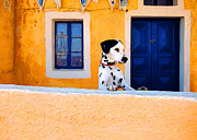 Dalmation Prints - Santorini Spot Print by John Galbo