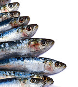 Head Framed Prints - Sardines Framed Print by Jane Rix
