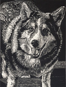Husky Drawings Prints - Sarge the Dog Print by Robert Goudreau