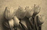 Fit Originals - Satin Tulips by Marsha Heiken