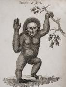 Anthropomorphism Prints - Satyrus, Ourang Outang. Pongo Or Jocko Print by Ken Welsh