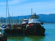 Sausalito Art - Sausalito harbor Tugs  by Nick Diemel