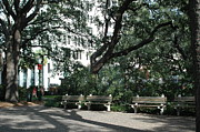 Photo Prints Prints - Savannah Park Benches and Trees Print by Kathy Fornal