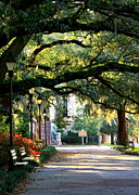 Park Benches Photo Framed Prints - Savannah Park Sidewalk Framed Print by Carol Groenen