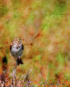 Sparrow Digital Art Posters - Savannah Sparrow . Texture . 40D5883 Poster by Wingsdomain Art and Photography