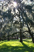 Forsyth Park Photos - Savannah Spring Sunshine by Carol Groenen