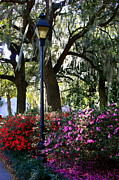 Forsyth Park Photos - Savannah Street Lamp in Springtime by Carol Groenen