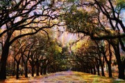 Carol Kinkead - Savannah Trees