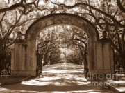 Live Oaks Photos - Savannaha Sepia - Wormsloe Plantation Gate by Carol Groenen