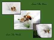 Conservation Art Poster Framed Prints - Save The Bees Save The World Framed Print by Joyce Dickens