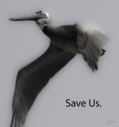 Save The Pelicans Print by Betsy A Cutler Islands and Science
