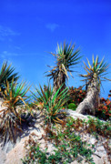 Palmetto Plants Photos - Saw Palmetto Canaveral National Seashore by Thomas R Fletcher