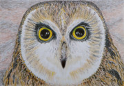 Yellow Beak Drawings - Saw Whet Owl by Yvonne Johnstone