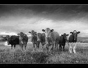 Medium Group Of Animals Posters - Say Cheese!! Poster by Paul Witterick Photography