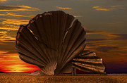 Scallop Sunrise At Aldeburgh Print by Darren Burroughs