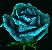 Digital Image Digital Art - Scanned Rose Blue by Paul Shefferly