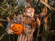 Scarecrow Posters - Scarecrow with a Carved Pumpkin  in a Corn Field Poster by Oleksiy Maksymenko