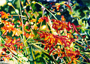 Crocosmia Paintings - Scarlet Crocosmia by Maureen Dean