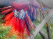 Scarlet Macaw Prints - Scarlet in Flight Print by Dolly Sanchez