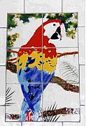 Wildlife Ceramics Metal Prints - Scarlet Macaw Metal Print by Dy Witt