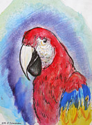 Macaw Art Print Framed Prints - Scarlet Macaw Framed Print by M C Sturman