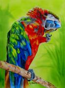 Macaw Painting Framed Prints - Scarlet Macaw Framed Print by Maria Barry