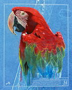 Macaw Mixed Media - Scarlet Macaw by Peter Ambush