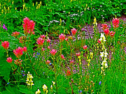 Montana Digital Art - Scarlet Paintbrush and Harebells and Butter and Eggs on Swiftcurrent Pass Trail by Ruth Hager