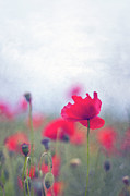 Red Flower Posters - Scarlet Poppies In Painterly Style Poster by Image by Catherine MacBride