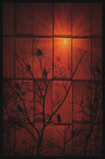 Sunset Framed Prints Digital Art Posters - Scarlet Silhouette Poster by Tom York