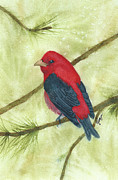 Tanager Originals - Scarlet Tanager by Elise Boam