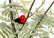 Tanager Originals - Scarlet Tanager by Mary Tuomi