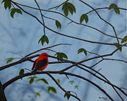 Tanager Originals - Scarlet Tanager by Ron Plaizier