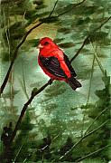 Tanager Originals - Scarlet Tanager by Sean Seal