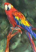 Scarlett Framed Prints - Scarlett Macaw parrot Framed Print by Christy  Freeman