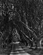 Dark Hedges Prints - Scary pathway Print by David McFarland