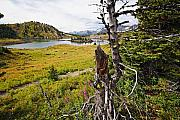 Scenic Alpine Lake And Meadow Print by George Oze