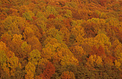 Fall Colors Photos - Scenic Overview Of Trees In Fall Color by Kenneth Garrett