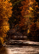 Beautiful Wolf Prints - Scenic River Print by Thomas Young