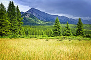 Grasses Prints - Scenic view in Canadian Rockies Print by Elena Elisseeva
