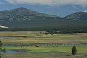 Bison Photos - Scenic Wyoming Landscape With Grazing by Norbert Rosing