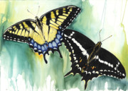 Human Mixed Media - Schaus Swallowtail Butterfly  by Anthony Burks