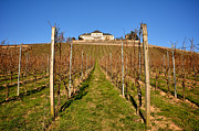 Grapes Photo Originals - Schloss Johannisberg by Matt MacMillan