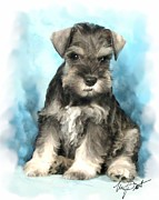 Mini Schnauzer Puppy Framed Prints - Schnauzer Pup Framed Print by Maxine Bochnia