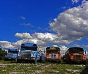 Bus Photos - School Bus Graveyard I by Elizabeth Hoskinson
