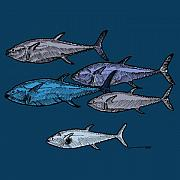 Animal Drawings Posters - School Of Tuna Fish - Full Color Poster by Karl Addison