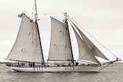 Sails Prints - Schooner Harvey Gamage of Islesboro Maine Print by Dustin K Ryan
