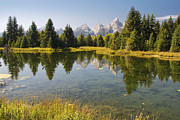 Wy Framed Prints - Schwabacher Landing Grand Teton National Park Framed Print by Carolyn Rauh