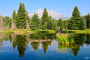 Tetons Art - Schwabacher Landing Still Waters by Greg Norrell