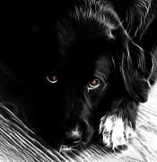 Black Lab Digital Art - Schwagg by Deanna Maxwell